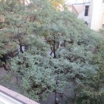400-year-old Spirit Tree behind the hotel, view from my windows.