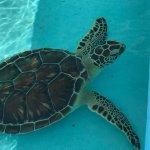 Palm Beach Shores Resort & Vacation Villas Foto