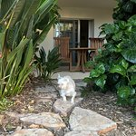Park Hyatt Aviara Resort Foto