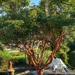 The beautiful paper tree!