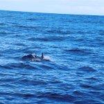 Bruny Island Cruises Foto