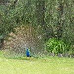 Photo of La Mirage Garden Hotel & Spa