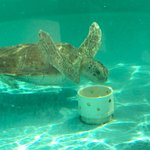 Photo de Loggerhead Marinelife Center