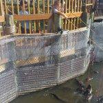 Feedling the alligators
