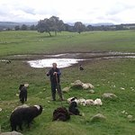 Neil the last of the true Highland Shepherds at Leault Farm sheep dog experience Kincraig Scotla