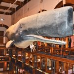 Big whale in the main hall, open to see skeleton on the other side