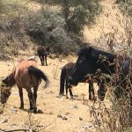 4 miles into hike and nothing like a bunch of wild horses blocking the trail!