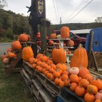 Goof selection of pumpkins with reasonable price