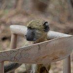 Φωτογραφία: Matetsi Private Game Reserve