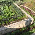 Home gardening plot at Chicago Botanic Garden in September