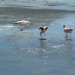 Flamingo-Paradies (3)