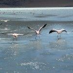 Flamingo-Paradies (2)