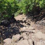 Rocky Trail down