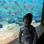 uShaka Marine World Photo