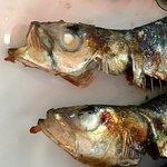 Photo of Rockfish