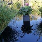 reflets de plantes et miroir