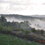 Morning fog on vineyard across the street.