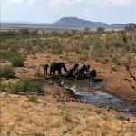 The Lodge overlooks the Waterhole - popular with the Elephants