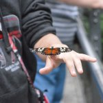 Niagara Parks Butterfly Conservatory