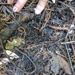 salamander we found