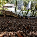 Foto de Meliá Puerto Vallarta All Inclusive