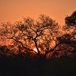 sunset on a game drive