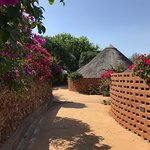 Pathway to room with bougainvilleas.