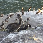 Pelican colony on beach