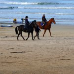 Exercising horses on the East Strand, Portrush.
