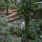 Rainforest Adventures Jamaica Foto