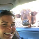 The animals were super friendly and came right up to our car