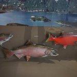 Photo of Anchorage Alaska Public Lands Information Center