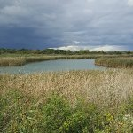 Titchfield Haven National Nature Reserve