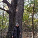 Largest oak tree we saw on the trails we walked on.