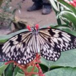 Tropical Butterfly House, Wildlife & Falconry Centre resmi