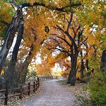 walking path to Rio Grande, fall foliage