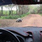 Tortuga en el camino
