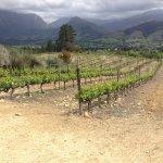 Franschoek valley and vines