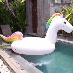 Floating Swan in the private pool (for 1 day)