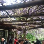 wisteria covered roof