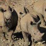Φωτογραφία: Sanbona Wildlife Reserve