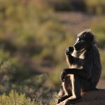 Photo of Sanbona Wildlife Reserve