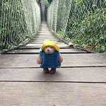 Paddington in the canapy