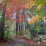 Beautiful fall color along the path