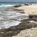 Φωτογραφία: Bonaire National Marine Park