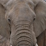 Leopard Hills Private Game Reserve-billede