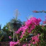 Herrliche Pflanzen und Blumen