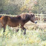At the end of the walk we saw these beautiful horses which are part of a grazing experiment.