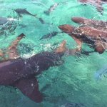 Nurse sharks and other fish