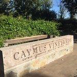 Foto di Caymus Vineyards